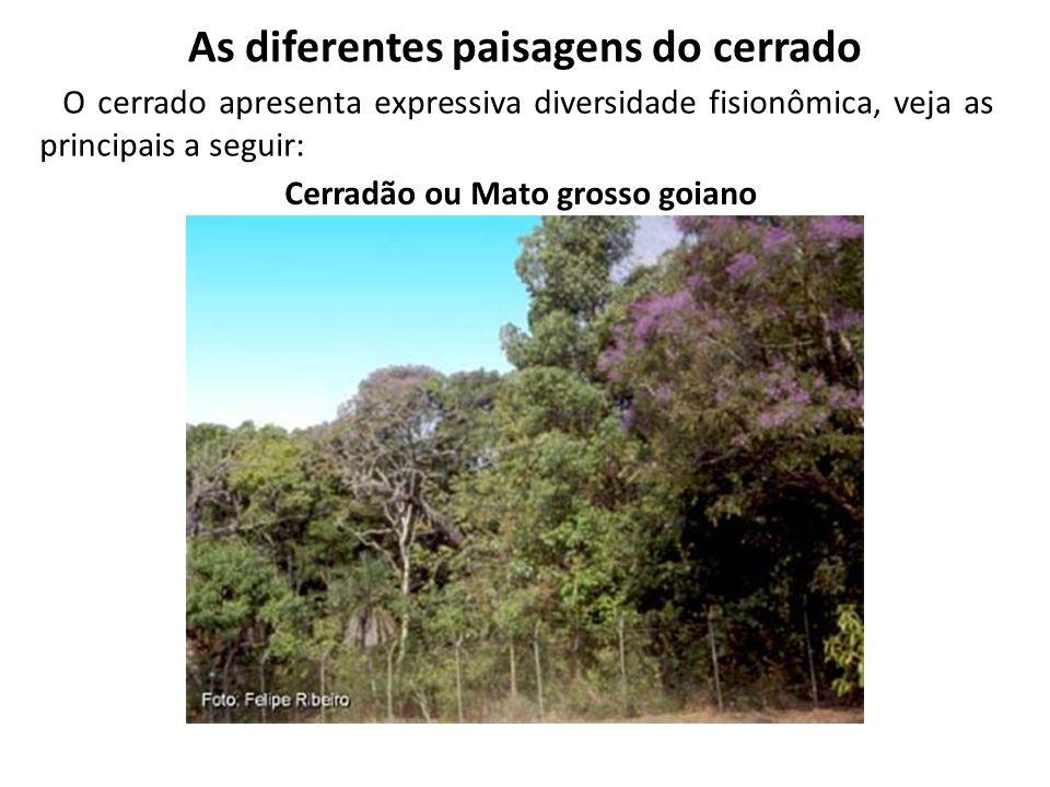 As diferentes paisagens do cerrado Cerradão ou Mato grosso goiano O cerrado apresenta expressiva diversidade fisionômica, veja as principais a seguir:
