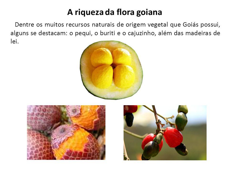 A riqueza da flora goiana Dentre os muitos recursos naturais de origem vegetal que Goiás possui, alguns se destacam: o pequi, o buriti e o cajuzinho,