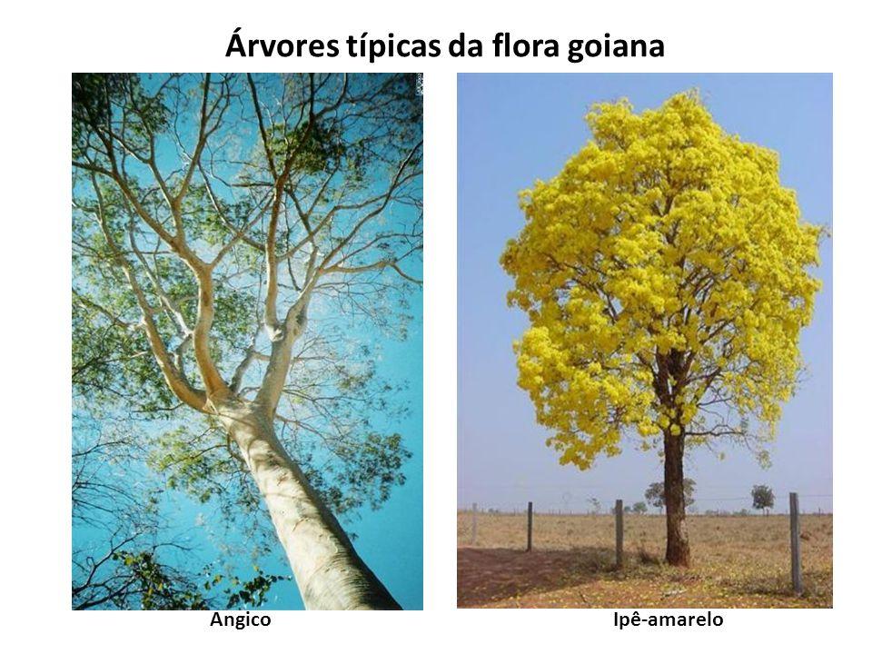 Árvores típicas da flora goiana AngicoIpê-amarelo