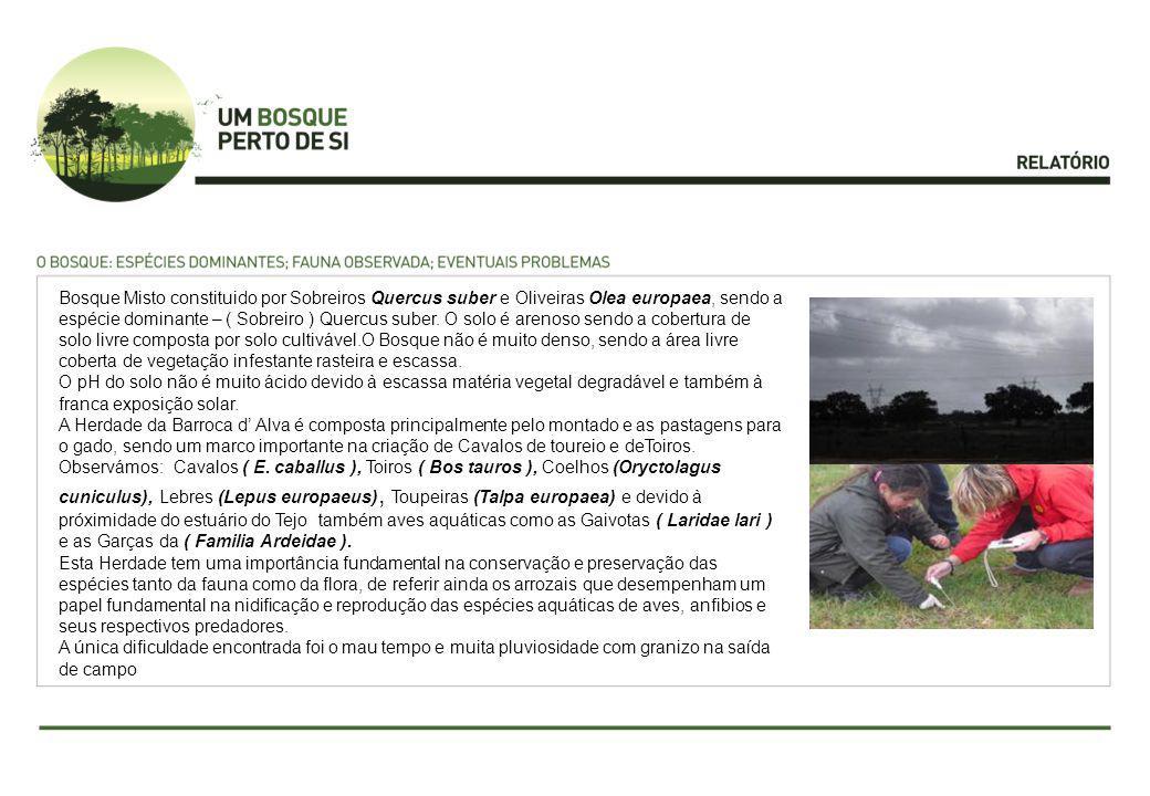 Bosque Misto constituido por Sobreiros Quercus suber e Oliveiras Olea europaea, sendo a espécie dominante – ( Sobreiro ) Quercus suber.