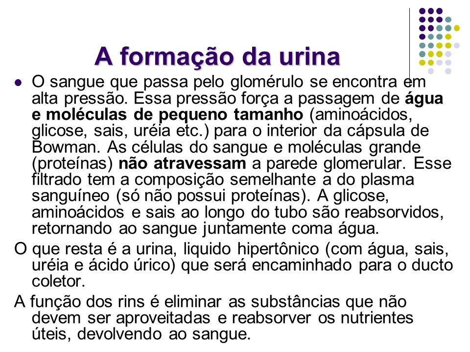 A formação da urina O sangue que passa pelo glomérulo se encontra em alta pressão.