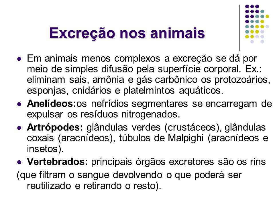 Excreção nos animais Em animais menos complexos a excreção se dá por meio de simples difusão pela superfície corporal. Ex.: eliminam sais, amônia e gá