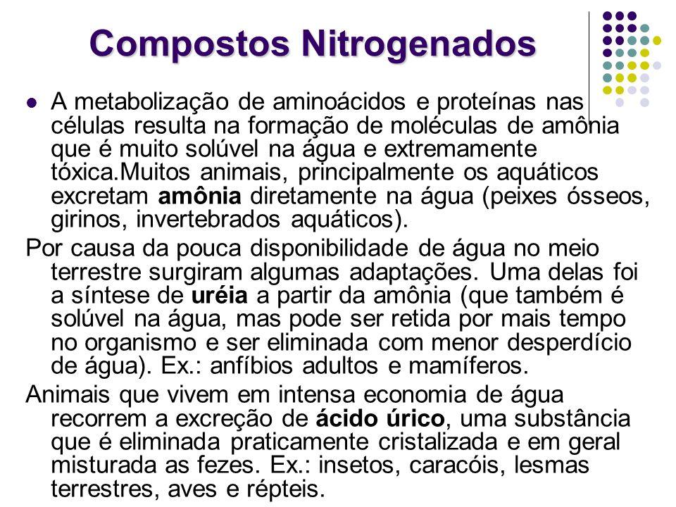 Compostos Nitrogenados A metabolização de aminoácidos e proteínas nas células resulta na formação de moléculas de amônia que é muito solúvel na água e
