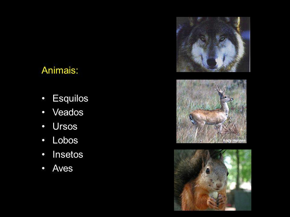 Animais: Esquilos Veados Ursos Lobos Insetos Aves