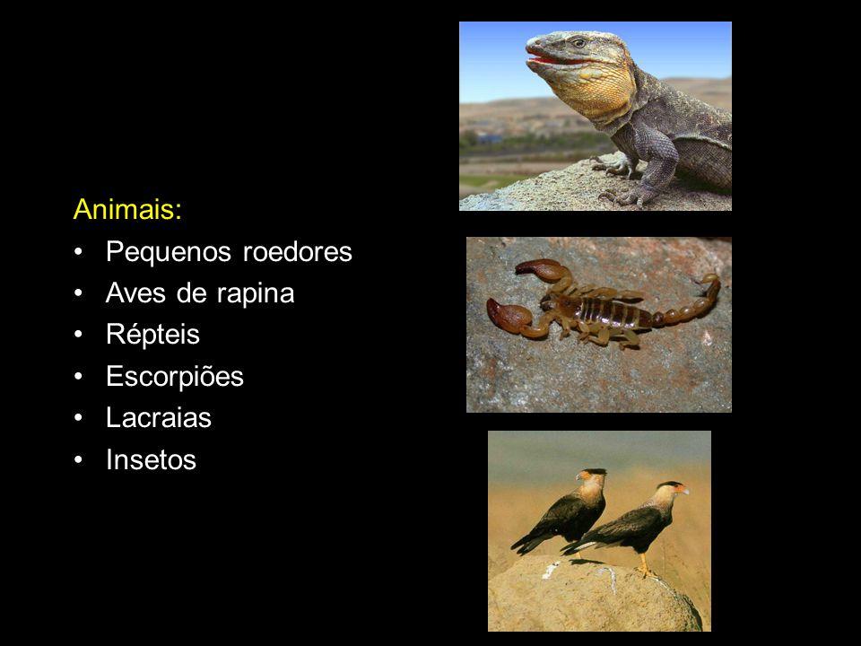 Animais: Pequenos roedores Aves de rapina Répteis Escorpiões Lacraias Insetos