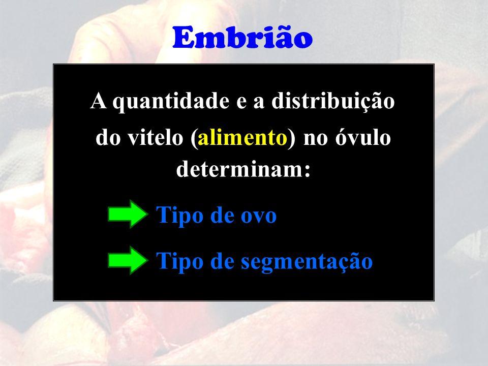 A quantidade e a distribuição determinam: alimento)no óvulodo vitelo ( Tipo de ovo Tipo de segmentação Embrião