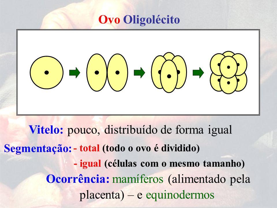 Ovo Oligolécito - total (todo o ovo é dividido) - igual (células com o mesmo tamanho) Segmentação: pouco,distribuído de forma igualVitelo: Ocorrência: