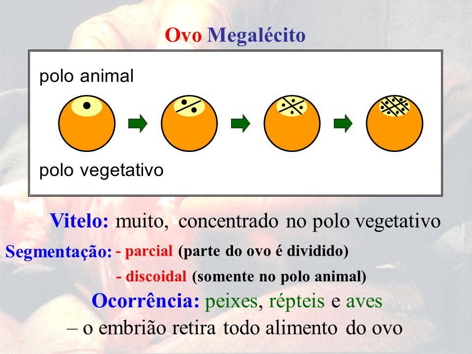 Ovo Megalécito Segmentação: muito,concentrado no polo vegetativoVitelo: – o embrião retiratodo alimentodo ovo Ocorrência:peixes,répteise aves polo pol
