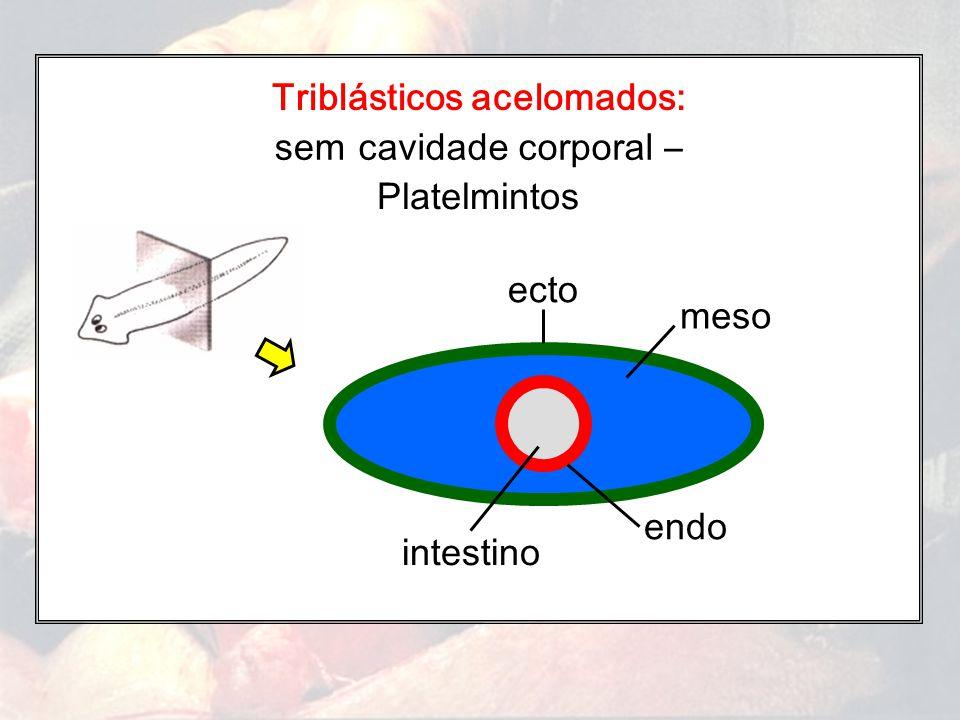 Triblásticos acelomados: Platelmintos cavidade corporal –sem intestino ecto meso endo