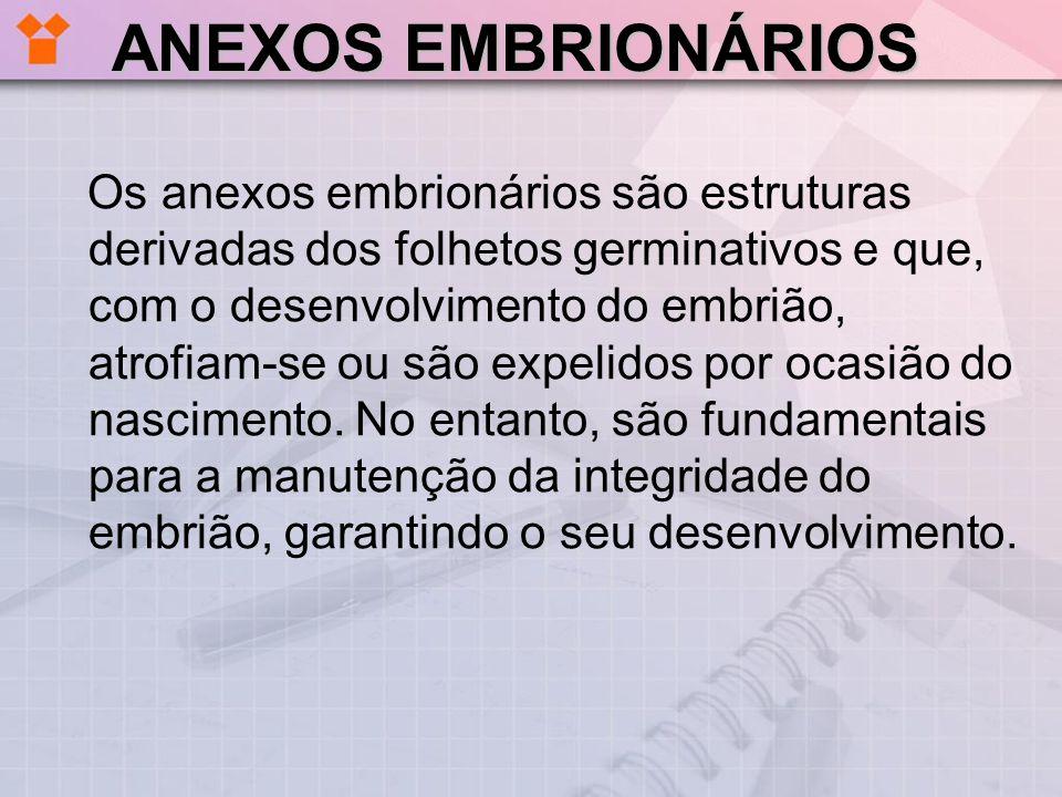 ANEXOS EMBRIONÁRIOS Os anexos embrionários são estruturas derivadas dos folhetos germinativos e que, com o desenvolvimento do embrião, atrofiam-se ou