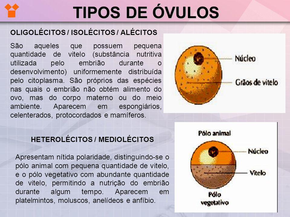 TELOLÉCITOS / MEGALÉCITOS Com grande quantidade de vitelo ocupando quase todo o ovo, ficando o citoplasma e o núcleo reduzidos a uma pequena área, há a cicatrícula ou disco germinativo, situado no pólo animal.