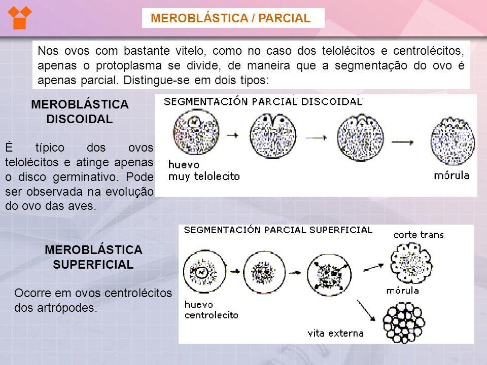 PLACENTA É o anexo exclusivo dos mamíferos, resultando da fusão do alantocório com a mucosa uterina.