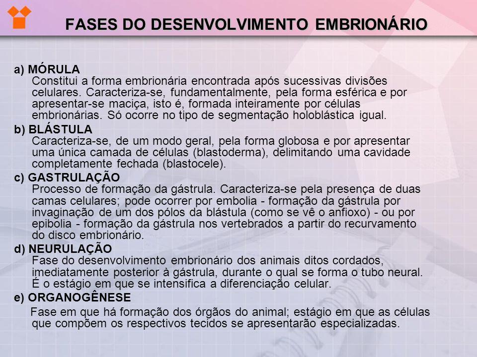 DETALHE DO DESENVOLVIMENTO EMBRIONÁRIO