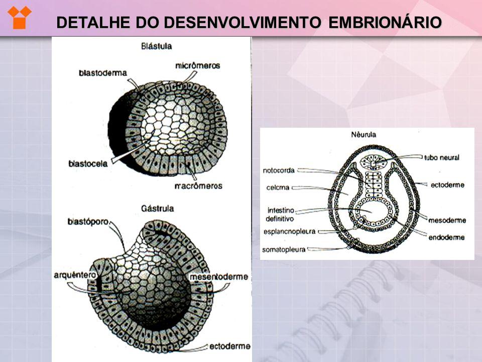 COMPARAÇÃO – TIPOS DE ANEXOS EMBRIONÁRIOS EM CORDADOS