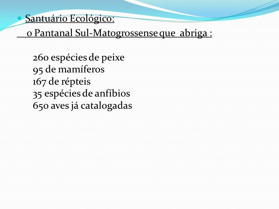 Santuário Ecológico: o Pantanal Sul-Matogrossense que abriga : 260 espécies de peixe 95 de mamíferos 167 de répteis 35 espécies de anfíbios 650 aves já catalogadas