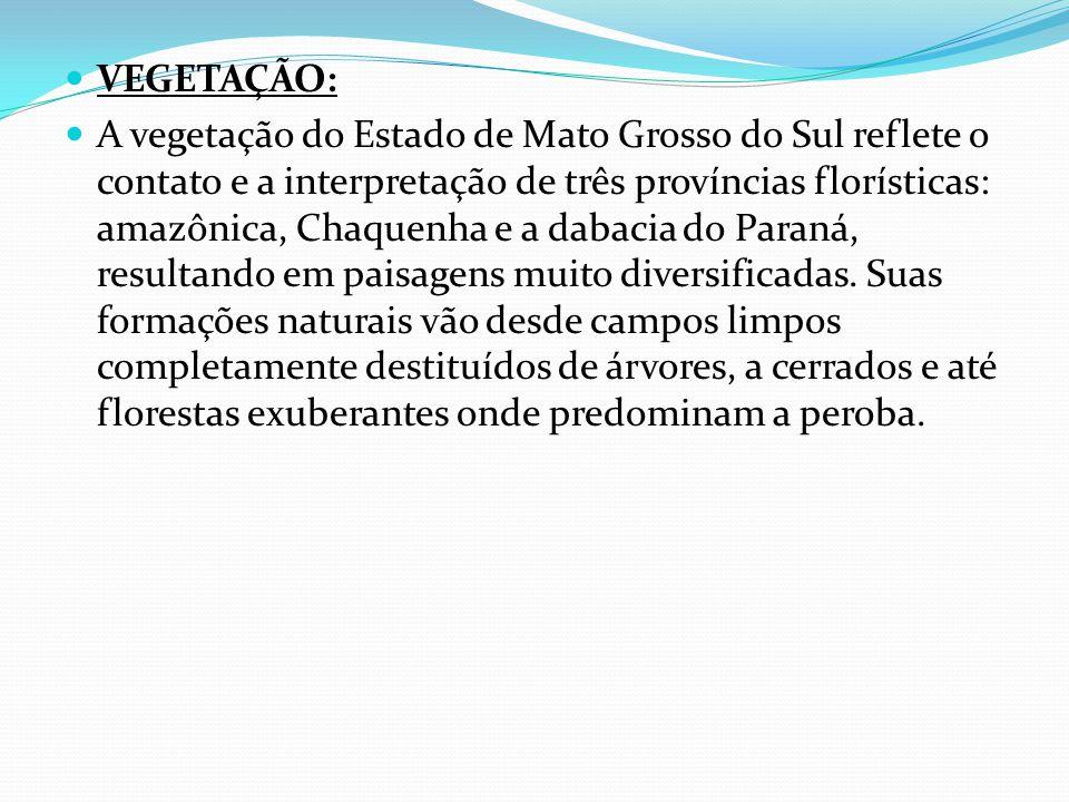 VEGETAÇÃO: A vegetação do Estado de Mato Grosso do Sul reflete o contato e a interpretação de três províncias florísticas: amazônica, Chaquenha e a dabacia do Paraná, resultando em paisagens muito diversificadas.