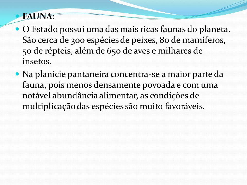 FAUNA: O Estado possui uma das mais ricas faunas do planeta.