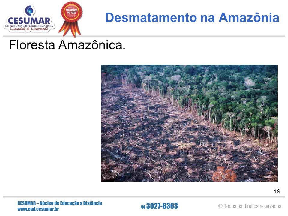 19 Desmatamento na Amazônia Floresta Amazônica.