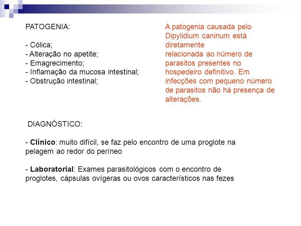 PATOGENIA: - Cólica; - Alteração no apetite; - Emagrecimento; - Inflamação da mucosa intestinal; - Obstrução intestinal; A patogenia causada pelo Dipylidium caninum está diretamente relacionada ao número de parasitos presentes no hospedeiro definitivo.