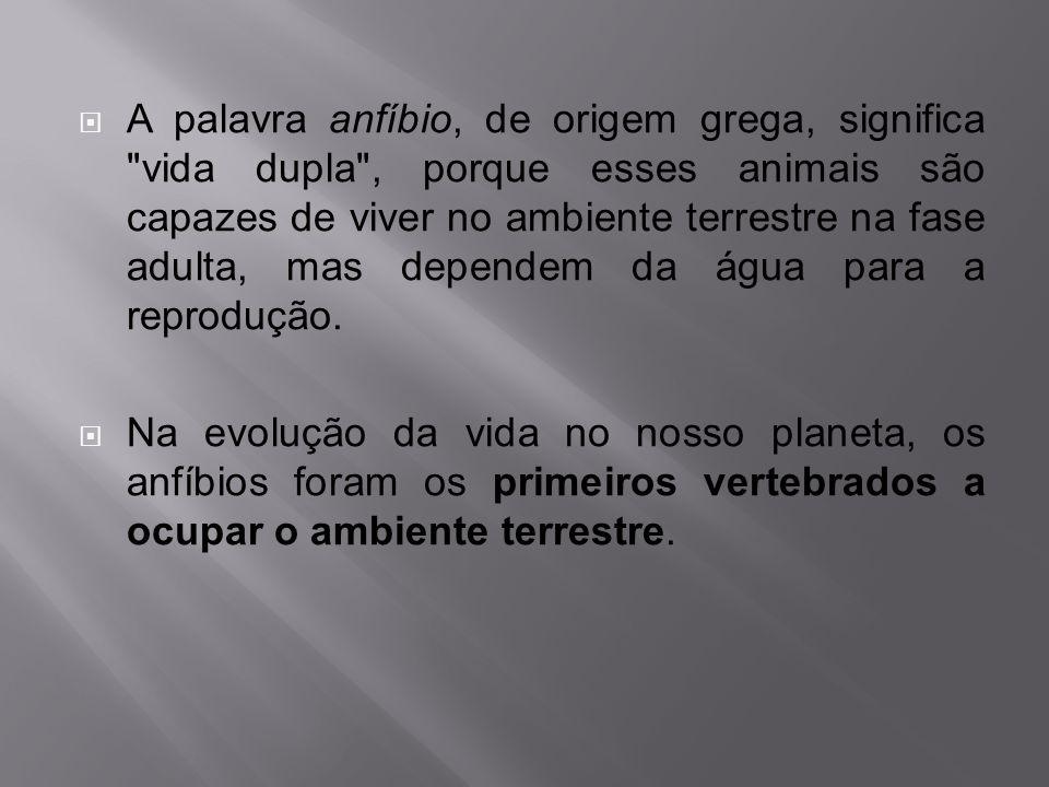 Anfíbios são vertebrados cuja característica fundamental é o desenvolvimento na fase larvária em meio aquático e na fase adulta em meio terrestre.