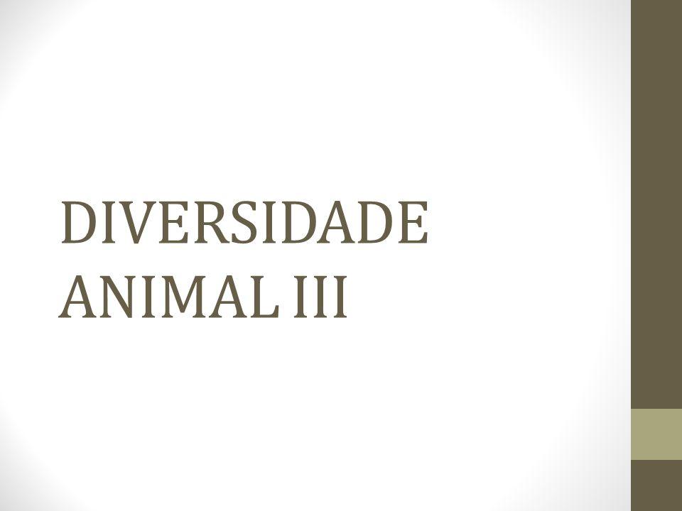 DIVERSIDADE ANIMAL III