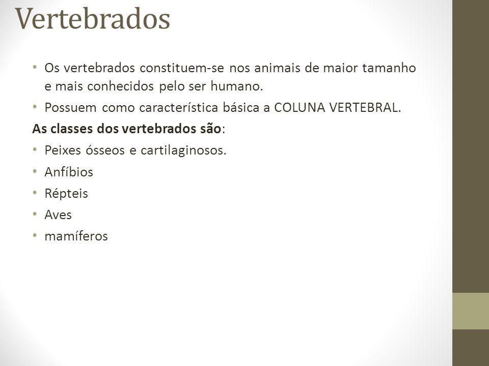 Vertebrados Os vertebrados constituem-se nos animais de maior tamanho e mais conhecidos pelo ser humano. Possuem como característica básica a COLUNA V