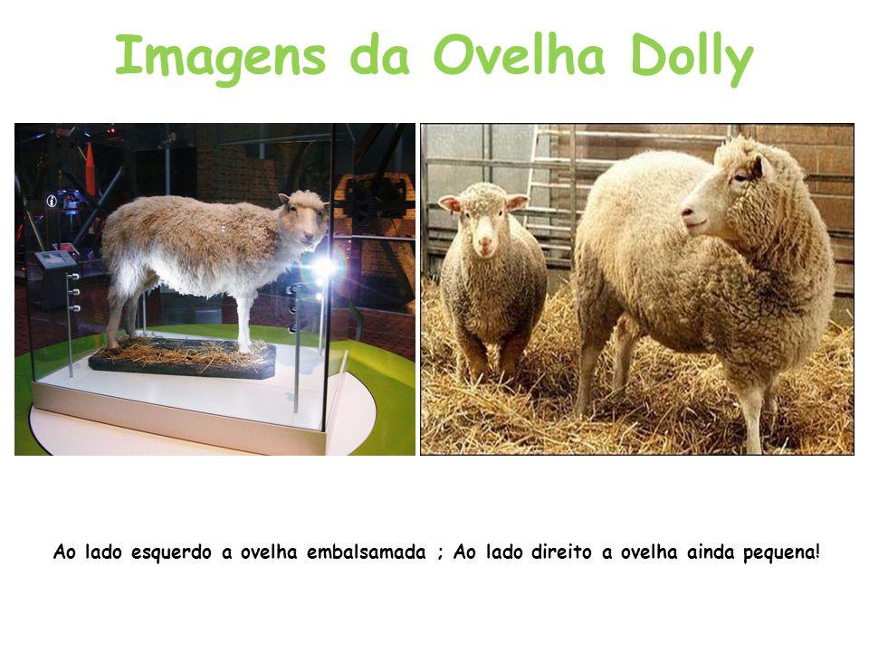 Imagens da Ovelha Dolly Ao lado esquerdo a ovelha embalsamada ; Ao lado direito a ovelha ainda pequena!
