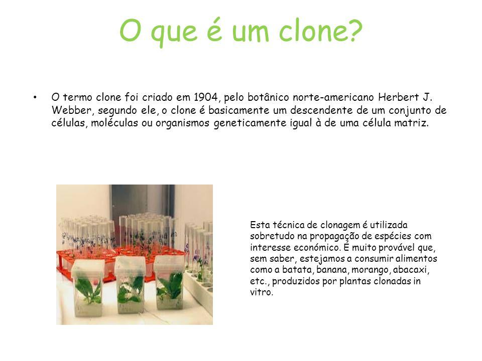 O que é um clone? O termo clone foi criado em 1904, pelo botânico norte-americano Herbert J. Webber, segundo ele, o clone é basicamente um descendente