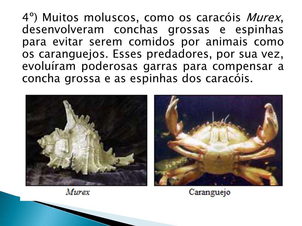 4º) Muitos moluscos, como os caracóis Murex, desenvolveram conchas grossas e espinhas para evitar serem comidos por animais como os caranguejos. Esses
