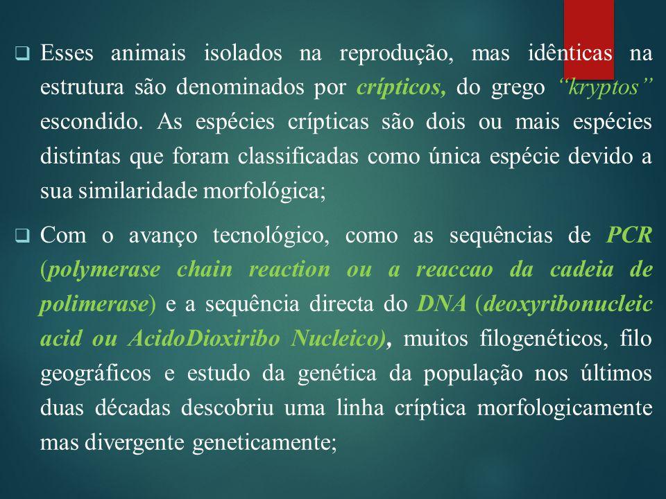 """ Esses animais isolados na reprodução, mas idênticas na estrutura são denominados por crípticos, do grego """"kryptos"""" escondido. As espécies crípticas"""
