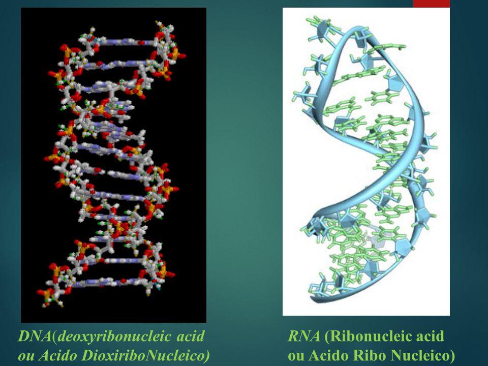 DNA(deoxyribonucleic acid ou Acido DioxiriboNucleico) RNA (Ribonucleic acid ou Acido Ribo Nucleico)