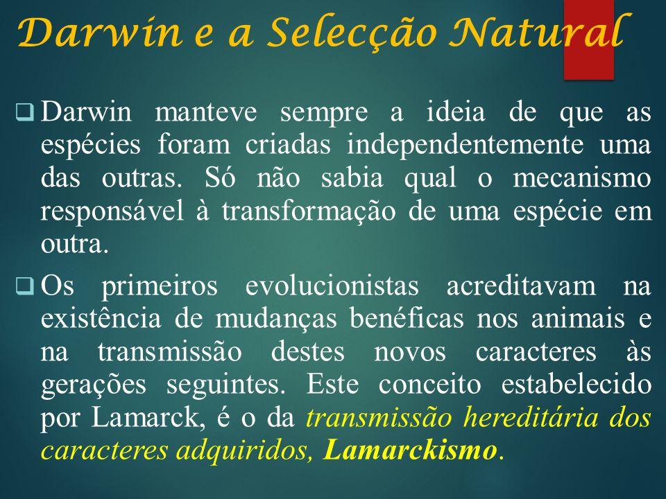 Darwin e a Selecção Natural  Darwin manteve sempre a ideia de que as espécies foram criadas independentemente uma das outras. Só não sabia qual o mec