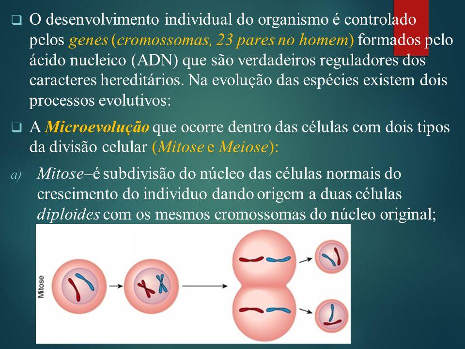  O desenvolvimento individual do organismo é controlado pelos genes (cromossomas, 23 pares no homem) formados pelo ácido nucleico (ADN) que são verdadeiros reguladores dos caracteres hereditários.
