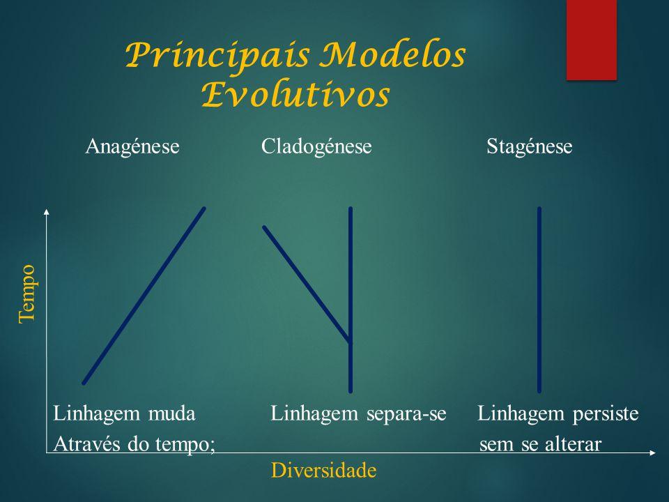 Principais Modelos Evolutivos Anagénese Cladogénese Stagénese Linhagem muda Linhagem separa-se Linhagem persiste Através do tempo; sem se alterar Tempo Diversidade