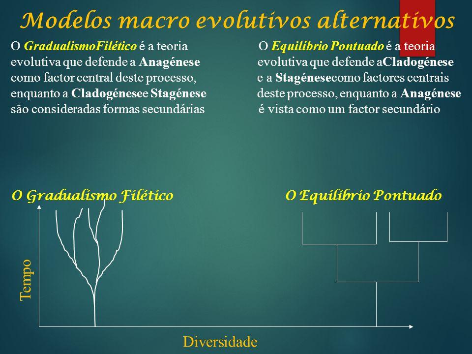 Modelos macro evolutivos alternativos Tempo Diversidade O GradualismoFilético é a teoria O Equilíbrio Pontuado é a teoria evolutiva que defende a Anag