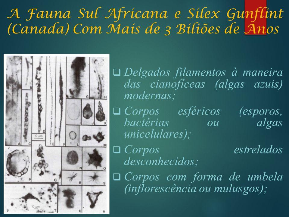 A Fauna Sul Africana e Silex Gunflint (Canada) Com Mais de 3 Biliões de Anos  Delgados filamentos à maneira das cianofíceas (algas azuis) modernas; 