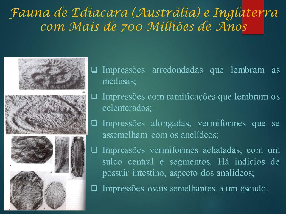 Fauna de Ediacara (Austrália) e Inglaterra com Mais de 700 Milhões de Anos  Impressões arredondadas que lembram as medusas;  Impressões com ramifica