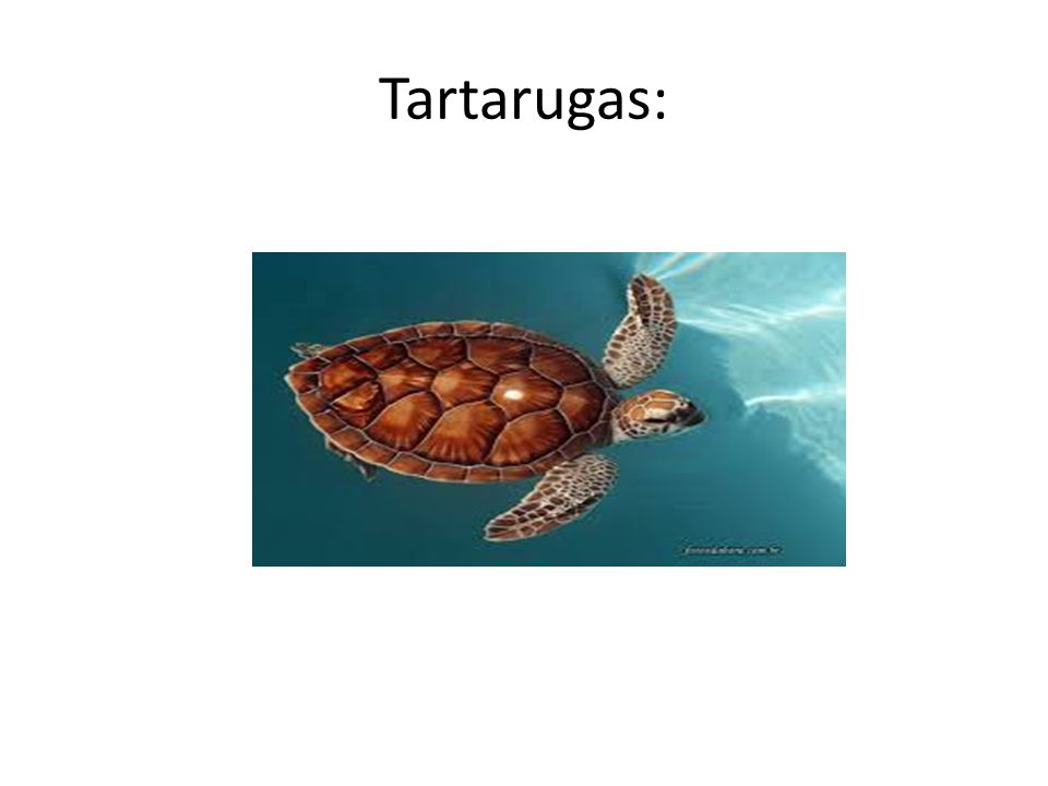 Tartarugas: