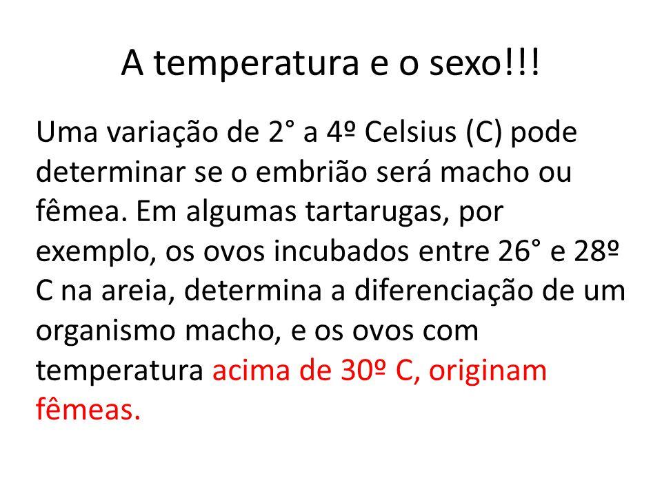 Uma variação de 2° a 4º Celsius (C) pode determinar se o embrião será macho ou fêmea.
