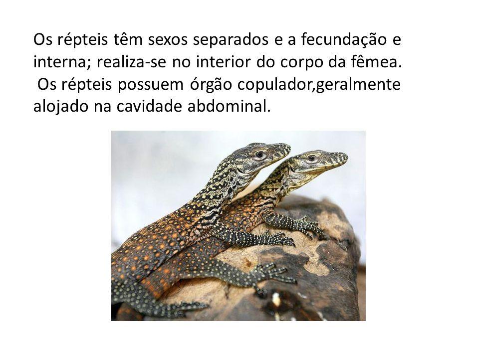 Os répteis têm sexos separados e a fecundação e interna; realiza-se no interior do corpo da fêmea.