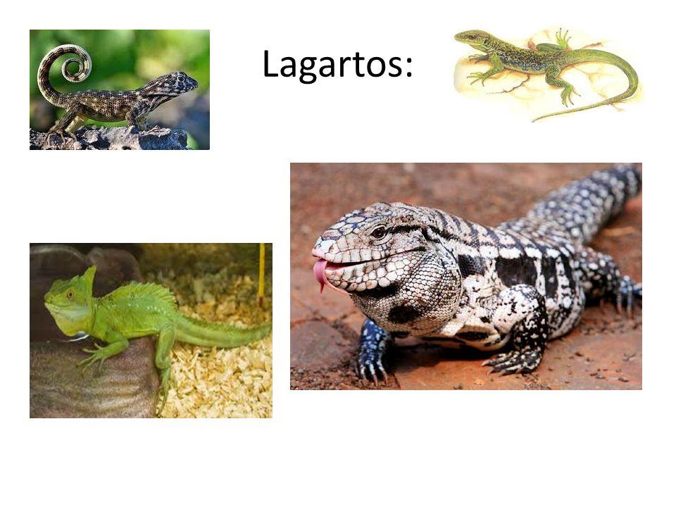 Lagartos: