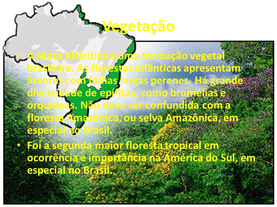 Vegetação A Mata Atlântica é uma formação vegetal brasileira. As florestas atlânticas apresentam árvores com folhas largas perenes. Há grande diversid