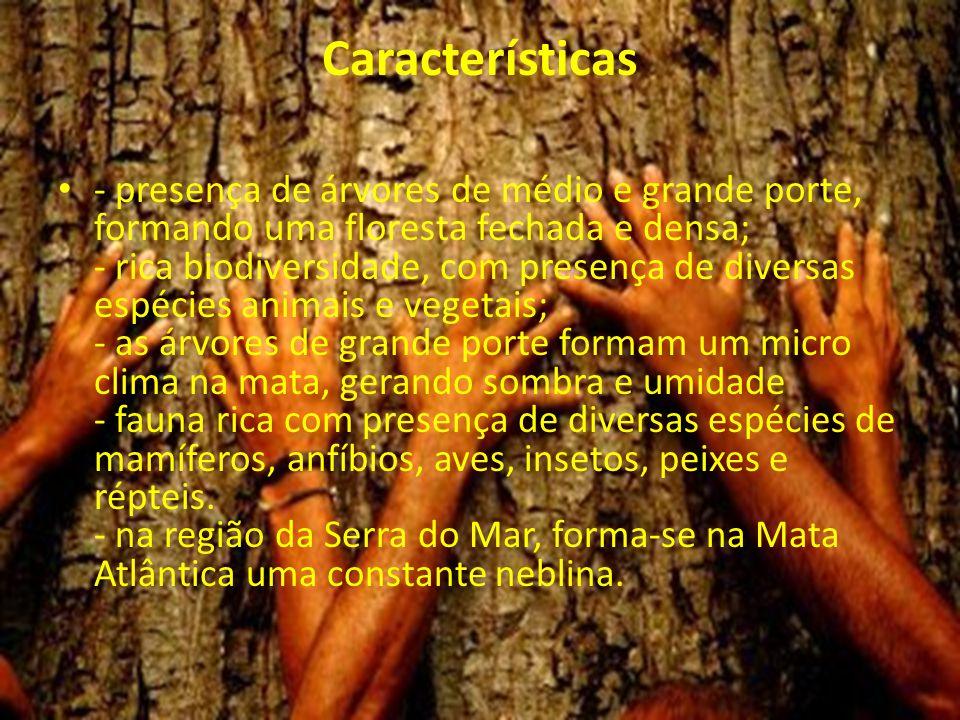 Características - presença de árvores de médio e grande porte, formando uma floresta fechada e densa; - rica biodiversidade, com presença de diversas