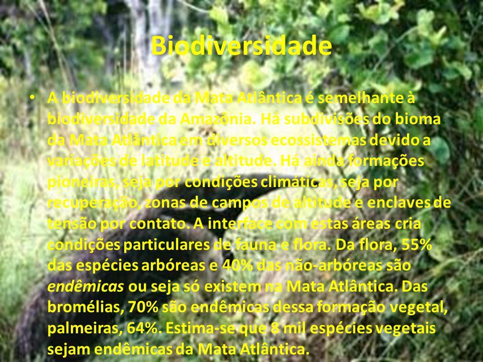 Biodiversidade A biodiversidade da Mata Atlântica é semelhante à biodiversidade da Amazônia. Há subdivisões do bioma da Mata Atlântica em diversos eco