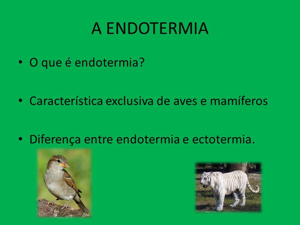 A ENDOTERMIA O que é endotermia? Característica exclusiva de aves e mamíferos Diferença entre endotermia e ectotermia.