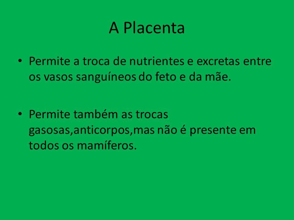 A Placenta Permite a troca de nutrientes e excretas entre os vasos sanguíneos do feto e da mãe. Permite também as trocas gasosas,anticorpos,mas não é