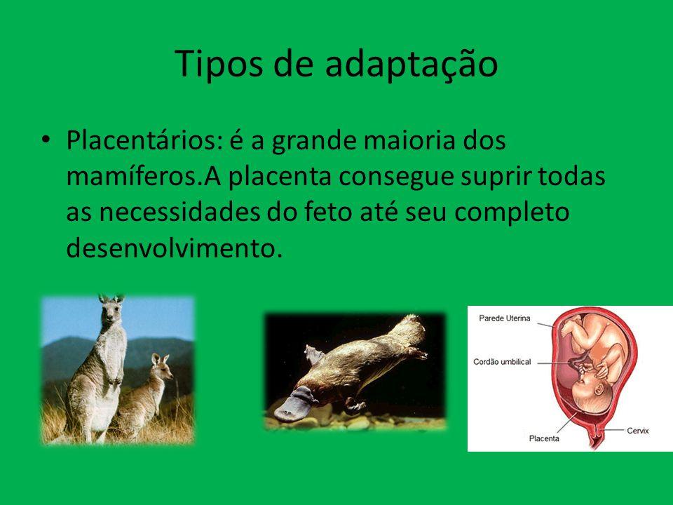 Tipos de adaptação Placentários: é a grande maioria dos mamíferos.A placenta consegue suprir todas as necessidades do feto até seu completo desenvolvi