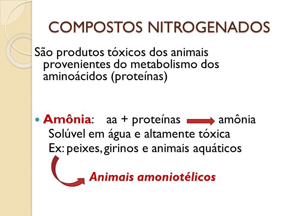 São produtos tóxicos dos animais provenientes do metabolismo dos aminoácidos (proteínas) Amônia: aa + proteínas amônia Solúvel em água e altamente tóx