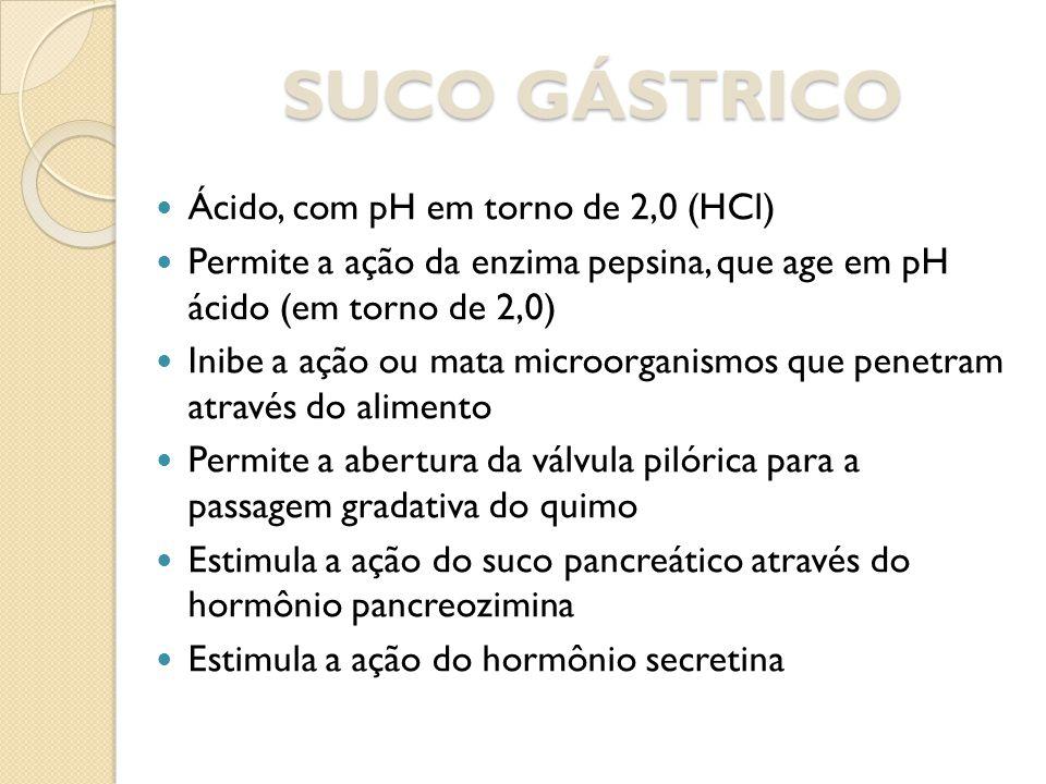 SUCO GÁSTRICO Ácido, com pH em torno de 2,0 (HCl) Permite a ação da enzima pepsina, que age em pH ácido (em torno de 2,0) Inibe a ação ou mata microor