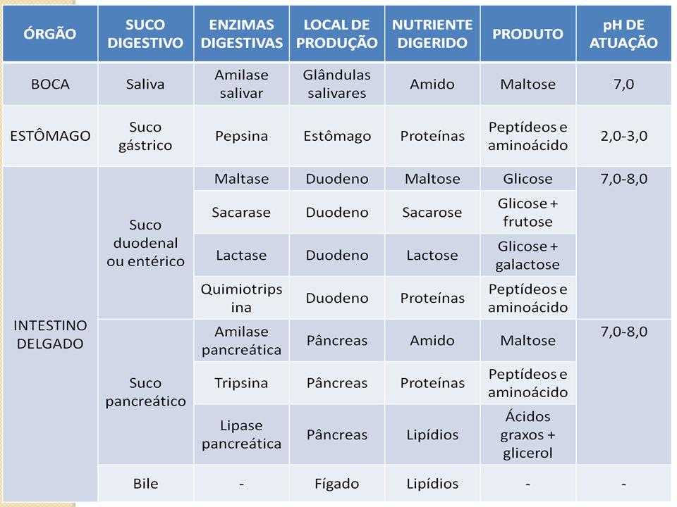Início do ciclo Menstruação Níveis de FSH e LH baixos Níveis de FSH e LH vão aumentando Maturação do óvulo, que produz estrogênio Via sangue, estrogênio atinge o útero O aumento de estrogênio faz endométrio crescer Produção de LH que coincide com liberação do folículo Ovócito II liberado Cai níveis de FSH e LH